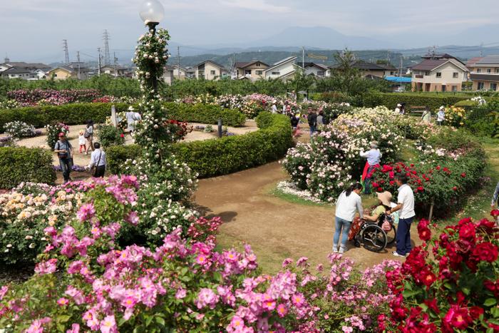 英国式庭園はゆったりとバラを楽しめます