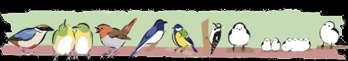 山の野鳥たち