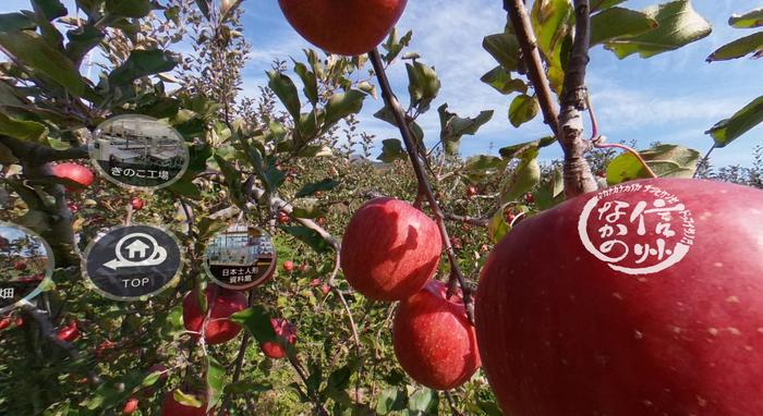 「信州なかの」ロゴをクリックすると、りんご狩りの動画が見られます