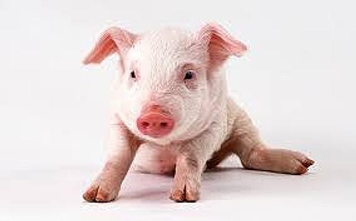 衛生環境の整った国産豚を使用