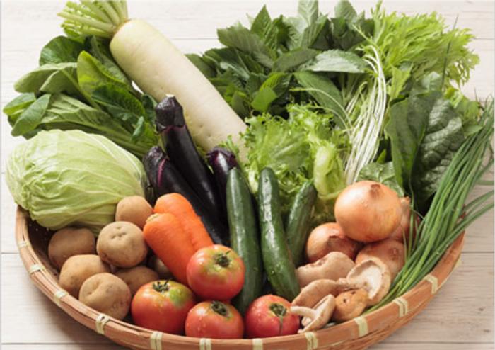 新鮮野菜あじわいコースは初回限定価格で1,980円