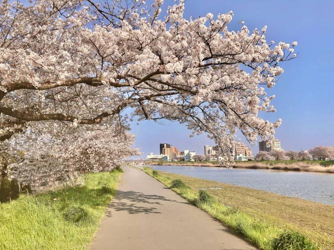 桜川河川敷