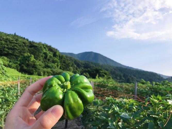 「ぼたんこしょう」がとれるのは、長野県中野市の永江地区。標高1,000m近い冷涼な土地で、ぴりっと辛く育ちます。