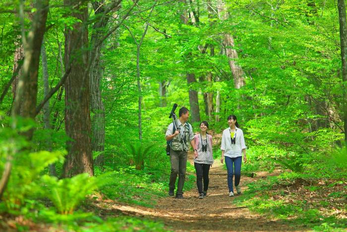 ガイドと巡る軽井沢野鳥の森