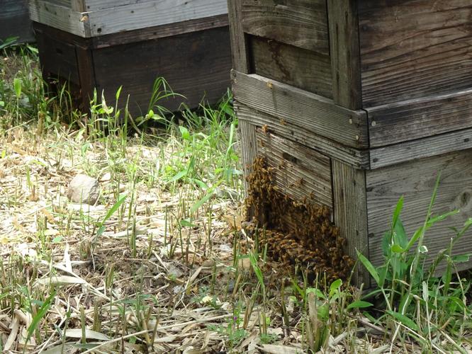 ぎふ清流里山公園に設置された養蜂箱