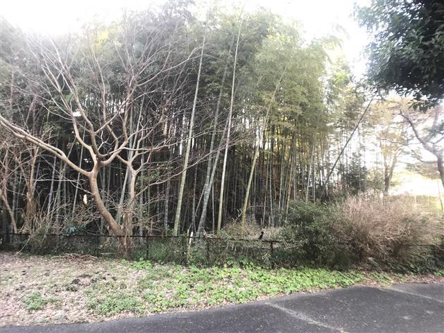 竹林は敷地の北側に位置