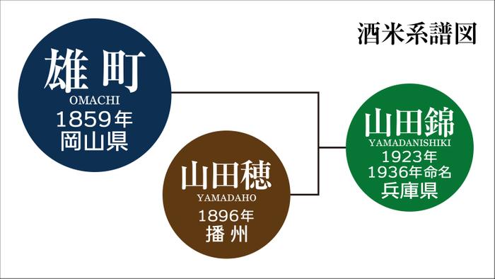 「雄町」は、山田錦の親にあたる日本最古の混血のない原生種としても知られている。
