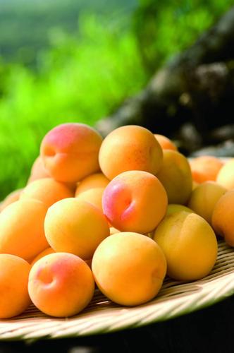 福井県産の完熟梅「黄金の梅」